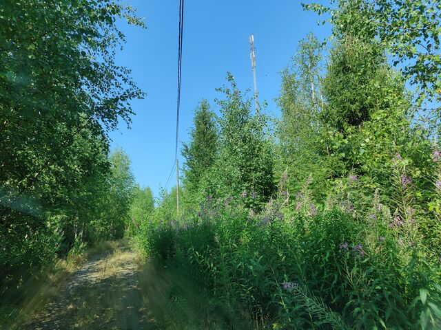 We knew the location where the balloon payload landed quite accurately based on 2m APRS tracking results. There was even a road leading to a mobile network antenna tower nearby, but the forest where the payload landed was very dense. (photo by OH3BHX)